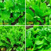 滿緣產地直送蔬菜