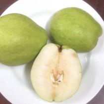 梨山馥梨 珠寶梨 1.8KG (裸裝)